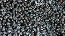 Separation of dried fruit by separator crumbler EGRETIER for food industry and collective restoration