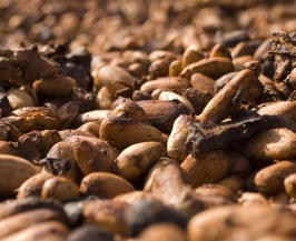 cocoa beans stored in tanks and transferred to the EGRETIER diverter valve and mixed by the EGRETIER dual mixer for food industry