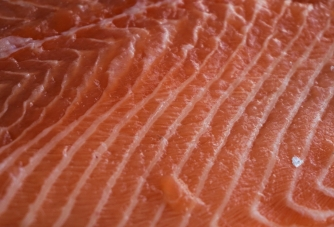 fish fillets and pieces transferred by EGRETIER bilobe volumetric pump for food industry
